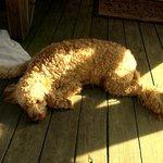 Dog Heaven ,,,Relaxing
