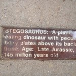 The educational plaque for the Stegasaur.