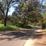 wide tree-lined bike trail