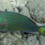 The Colorful Florida Keys!!
