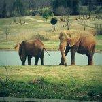 Elephants at the zoo!