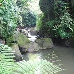 Jungle stream site for Spa on the River
