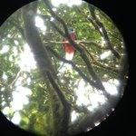 The amazing Quetzal, seen from Marcos scope.
