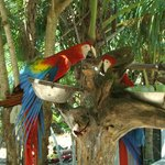 animal sanctuary