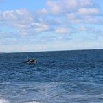 Saliendo a respirar en el mar azul de Puerto Madryn