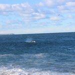 Se puede apreciar lo cerca que estan las ballenas de la costa