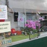 stuff for sale in Wilsons window