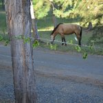 Horse just hangin out on property