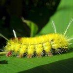 A caterpillar at La Palapa Garden.