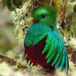 The famous Quatzar bird on the Serra de La Muerte only 1:30 hours from La Palapa.