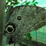 Toller Schmetterling