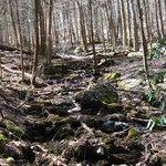 Creek running along Coosa Trail