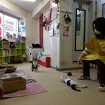 The owner playing with her babies.