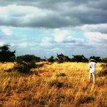 Прогулка с жирафами