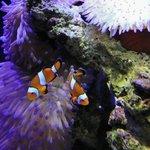 A few Nemos .