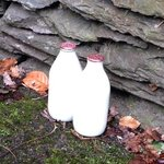 Milk delivery to the back door of the B &B - have not seen this in awhile!