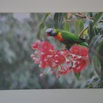 Rainbow Lorikeet painting