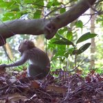 young monkey curiously picking up a leaf