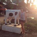 Daisy the cow.