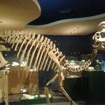 Impressive dinosaur skeleton