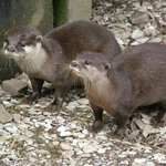 Otters - March 2014