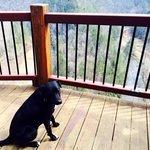 Bella loving the Common area balcony
