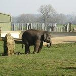 Elephant Compound