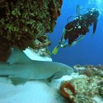 Photo of my husband diving with a nurse shark