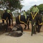 Jumbo Elephant Park
