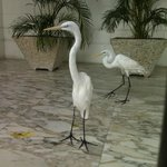 Loved the herons inside the Presidential Palace.
