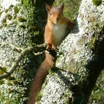 One of the Red Squirrels in the Park