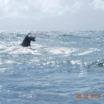 Great area for HumpBack Whales