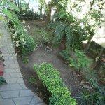 Mirando hacia el hermoso jardin interior