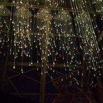 the lights at night