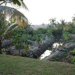 Paraman's vegetable garden