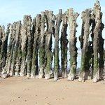 mur de bois plantés