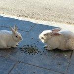 White Point bunnies
