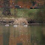 November at Timber Lakes
