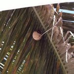 wasp or hornet nest in tree above bed on beach