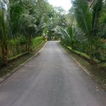 Driveway into the resort