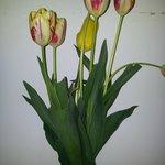 tulipanes en tods lados, hermosos