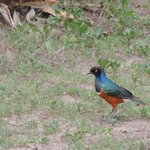 A bird of Ndutu Lodge