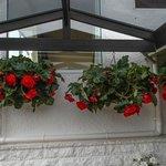 Gorgeous hanging begonias
