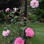 Roses and beautiful flowers in the garden
