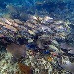 Schooling-Fish-Puerto-Morelos