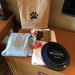 Dog gift bag!