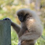 One of the monkeys on one of the islands.
