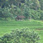 Belimbing Village - Bali