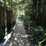Beautiful dappled path