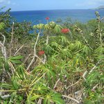 Beautiful St.Kitts